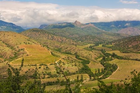 Beautiful vineyards in the mountains of Crimea