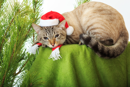 Funny cat in a Santa Claus hat under a Christmas tree