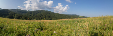 Beautiful summer panorama of lush vegetation in the Altai Mountains