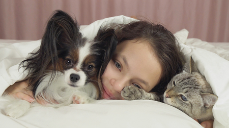 Happy teen girl communicates with dog Papillon and Thai cat in the bed Фото со стока