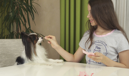 Girl teenager and dog Papillon guess on desires, girl is happy with chosen desire
