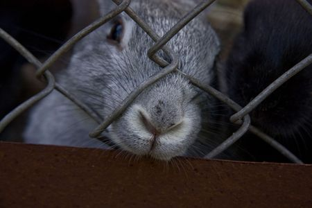 rabbit cage: coniglio in prigioniero di protezione degli animali il gabbia