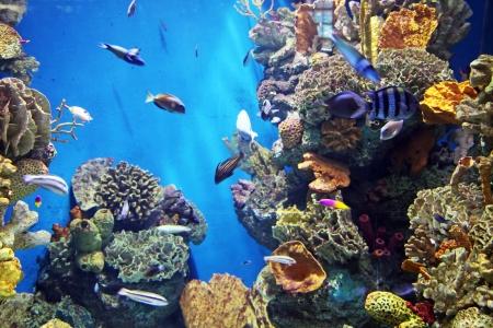 Acquarium with submarine life photo