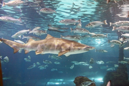 A shark is swimming in the deep water photo