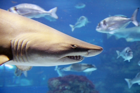 A shark is swimming in the deep water Stock Photo - 19258109