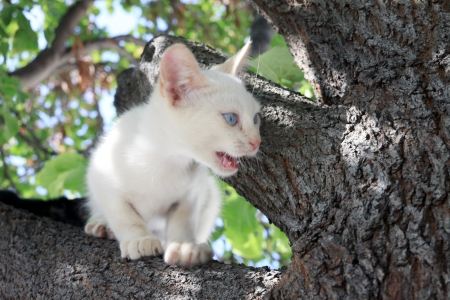 smal: A smal cat on the tree Stock Photo