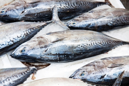 Some tuna fishes exposed at the market Stock Photo