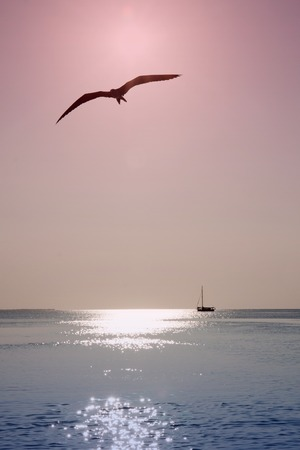 Bird flying on the ocean photo