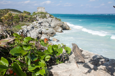 Iguana is looking at Mayan ruins in Tulum, Mexico
