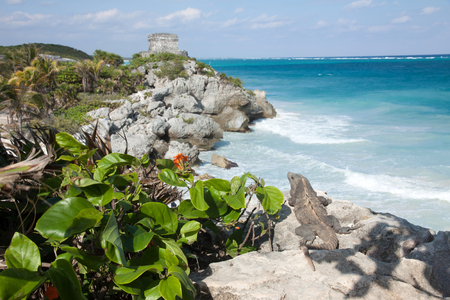Iguana looking at Mayan ruins in Tulum, Mexico