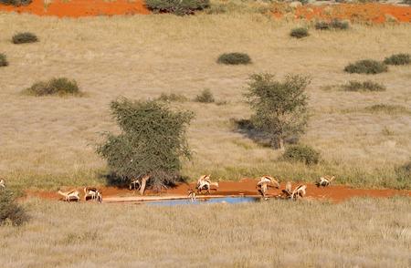 pozo de agua: Algunos potable gacela en un pozo de agua, Namibia Foto de archivo