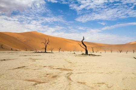 arboles secos: �rboles muertos en el desierto de Sossusvlei, Namibia Foto de archivo