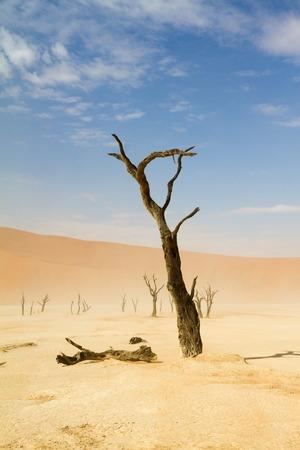 arboles secos: �rboles muertos del desierto de Sossusvlei, Namibia