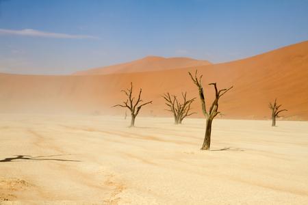 arboles secos: �rboles muertos en el parque Sossusvlei, Namibia Foto de archivo