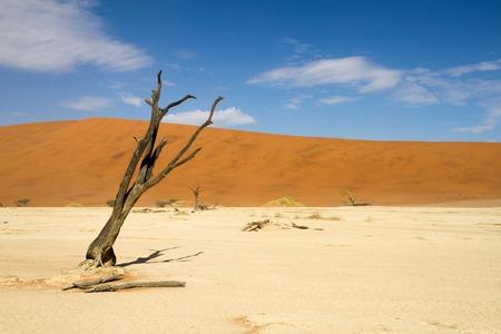 vlei: Dead trees  of the Sossusvlei desert, Namibia