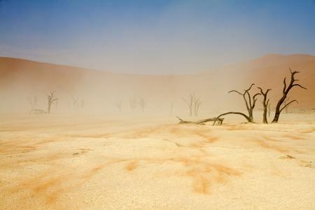 windy: A windy desert Sossusvlei, Namibia