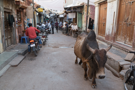 bikaner: BIKANER, INDIA - OCTOBER 12, 2015: A every day view of a street in the Bikaner old market, India,  with people sitting in front of their houses and a cow walking in the street Editorial