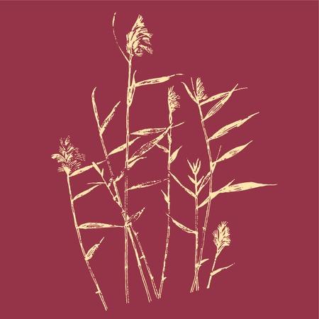 windward: Reed wind sketch line drawing
