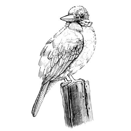 windward: Bird sketch line drawing