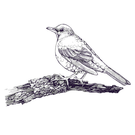 Bird sketch line drawing