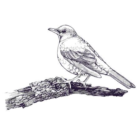 line drawings: Bird sketch line drawing