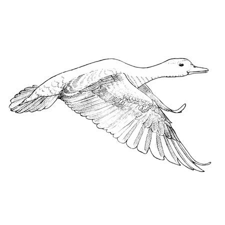 windward: Asuka sketch line drawing Illustration