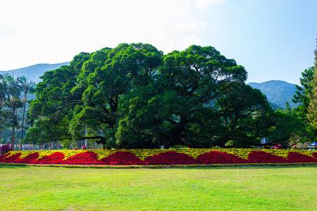 Ancient banyan tree at Fuzhou Forest Park