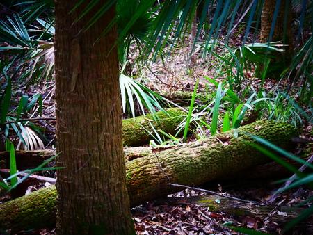 Cut down tree jungle Reklamní fotografie - 117300819