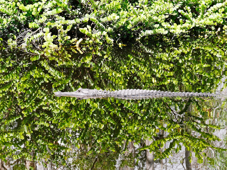 aligator river hide