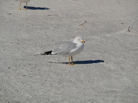 seagull alone