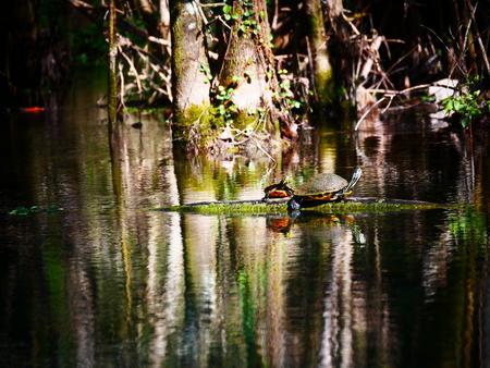 rescue turtle tree tree trunk