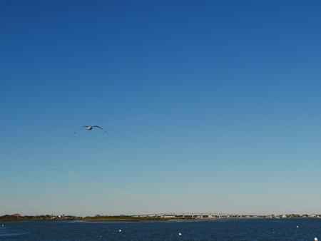 seagull bay bridge Archivio Fotografico