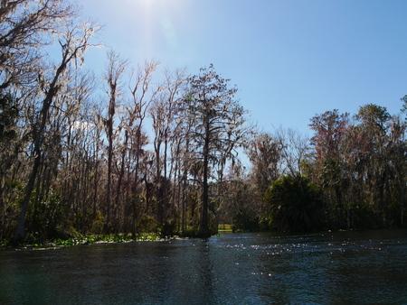 Mangroves nature river