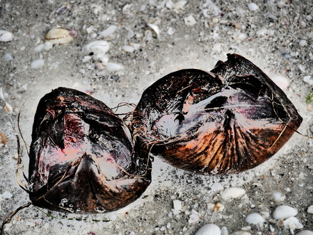 coconut shell beach