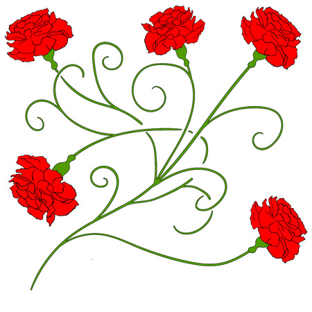 red  carnation: Beautiful red carnation isolated Vector Illustration