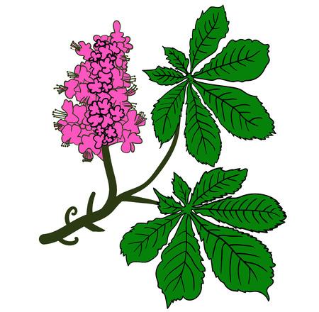 watercolor flowers lilacs spring bouquet image Illustration
