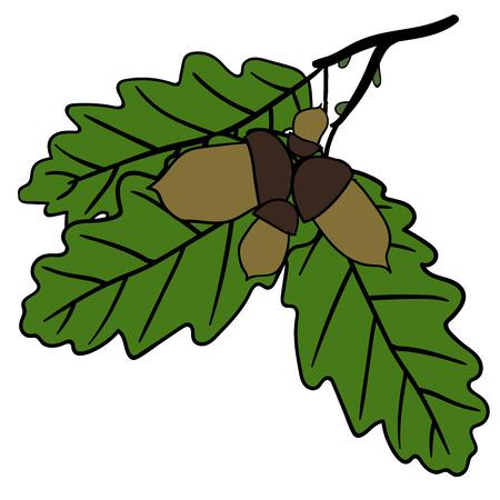 oak leaves: Oak leaves and acorns - autumn nature