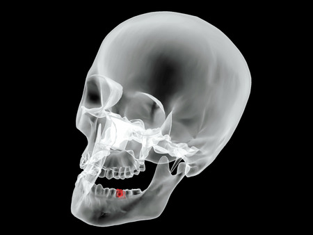 xray: Blueprint with x-ray Vector image black read 1