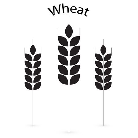 wheat flour: Ears of Wheat, Barley or Rye visual graphic icons, ideal for bread packaging, beer labels etc.