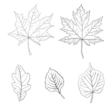chokeberry: Set of colorful autumn leaves. Vector illustration. 1