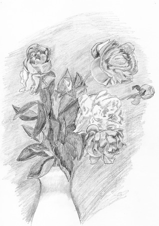 Drawing of  flowers on white  background pencil