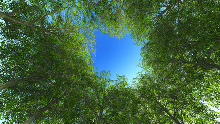 coma: Nature green wood. Trunk and coma. Sky. 3d rendering Stock Photo