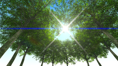 coma: Nature green wood. Trunk and coma. Sun 3d rendering Stock Photo