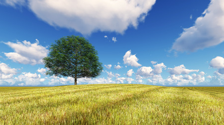 vacant land: Landscape tree field grass 3D render