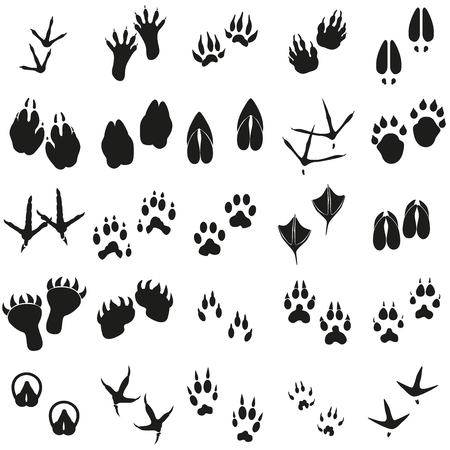 leopard gecko: Silhouettes animal birds and mammals footprints set Vector icons.