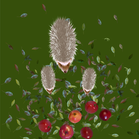 Hedgehogs and apples Vector illustration