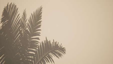 Shadow palm leaves overlay effect Tropical Sun light 3d render