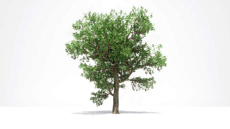 Tree growth on white New life concept 3d render Standard-Bild
