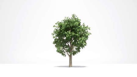 Green tree growth on white Nature spring season 3d animation 3d render