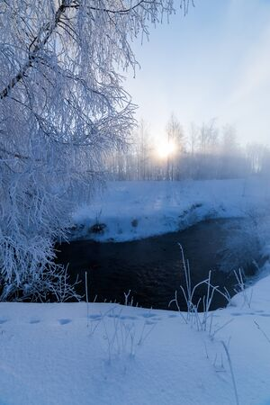 foggy winter riverside at morning with sun shine between birch trees.